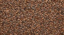 Солод ячменный «Шоколадный» 900 EBC, Курский солод - фото 6441