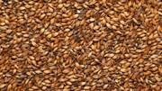 Солод карамельный пивоваренный «Карамельный 300», Курский солод