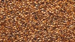 Солод карамельный пивоваренный «Карамельный 300», Курский солод - фото 5445