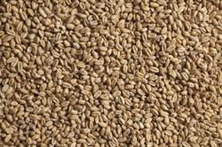 Солод светлый пшеничный Суфле (Sufle) 1 кг. - фото 5677