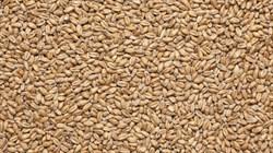 Солод IREKS Weizenbraumalz Dunkel Солод пшеничный темный EBC 14-18 - фото 6415