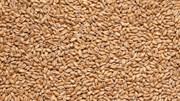Пшеничный пивоваренный солод «Wheat malt», Viking malt
