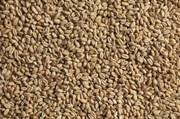 Солод светлый пшеничный Суфле (Sufle) 1 кг.