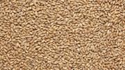 Солод IREKS Weizenbraumalz Dunkel Солод пшеничный темный EBC 14-18