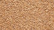 Солод IREKS Weizenbraumalz hell Солод пшеничный светлый EBC 3-5